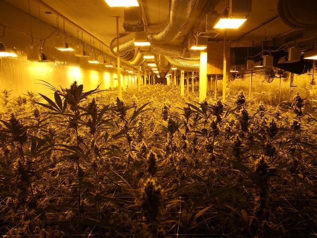 Polhemelingenplant